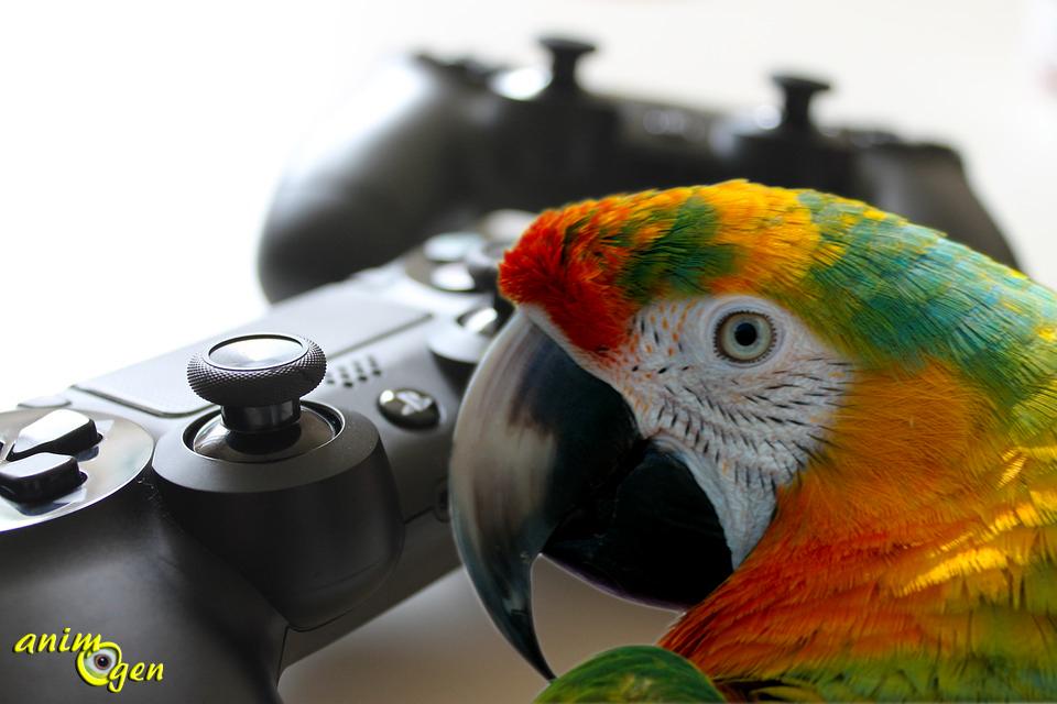 Santé et jeu vidéo : Call of Duty va-t-il sauver les perroquets de l'ennui ?