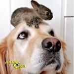 Un lapin et un chien peuvent-ils vivre ensemble ?