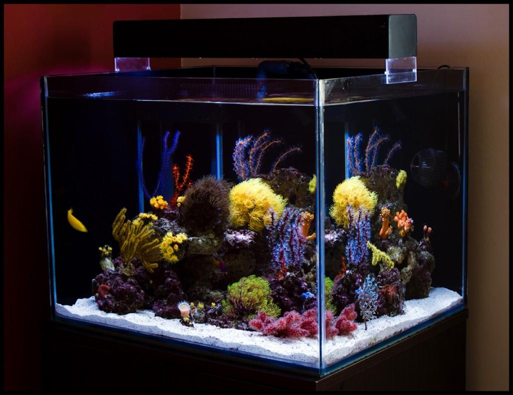 L'aquariophilie récifale, un luxe à notre portée ?