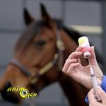 Santé : vaccins obligatoires et/ou recommandés pour les chevaux