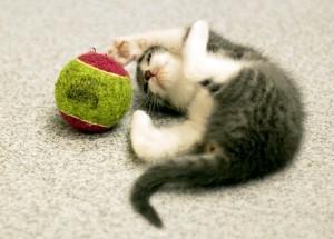 L'arrivée d'un chat ou d'un chaton à la maison