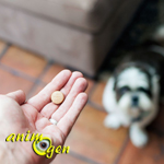 Comment administrer des médicaments à un chien ?
