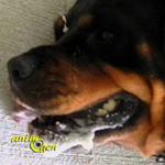 Santé : causes et symptômes des convulsions chez le chien