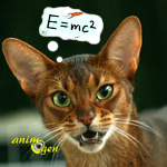 Education : top 5 des races de chats les plus intelligentes