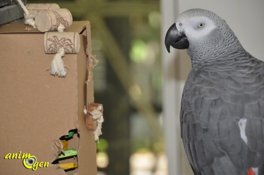 Fabriquons une armoire à jouets pour la rentrée de nos perroquets
