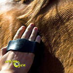 Ma première leçon d'équitation : la préparation du cheval et du cavalier
