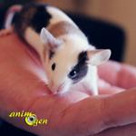 La souris est-elle l'animal de compagnie qu'il vous faut ?