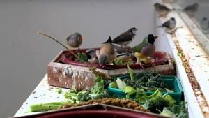 Quels critères respecter pour choisir les espèces d'une volière communautaire ?