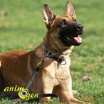 Adoption : les races de chiens actives conviennent-elles à tout le monde ?