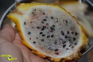 Le pitaya jaune, un fruit du dragon en or pour nos perroquets