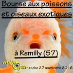 Bourse aux poissons et oiseaux exotiques à Rémilly (57), le dimanche 27 novembre 2016