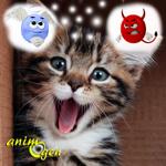 Que faire lorsqu'un chaton importune sans cesse les chats adultes de la maison ?
