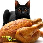 Comment bien nourrir son chat avec des petits plats faits maison ?