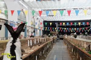 Animogen à la 20 ème Exposition d'animaux de basse-cour de Grasse (06)