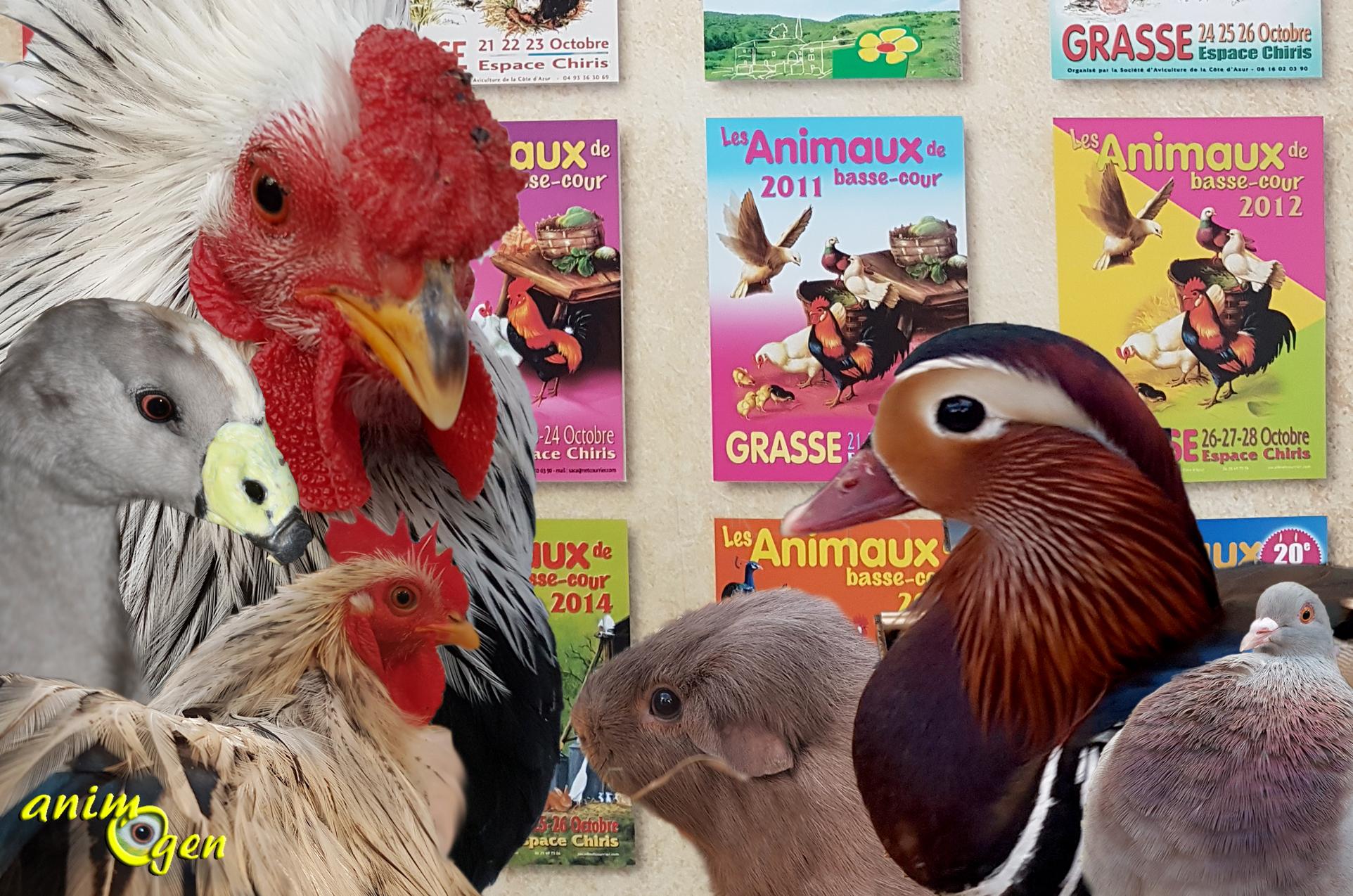 Animogen la 20 me exposition d animaux de basse cour de for Poules d ornement pour le jardin ou la basse cour