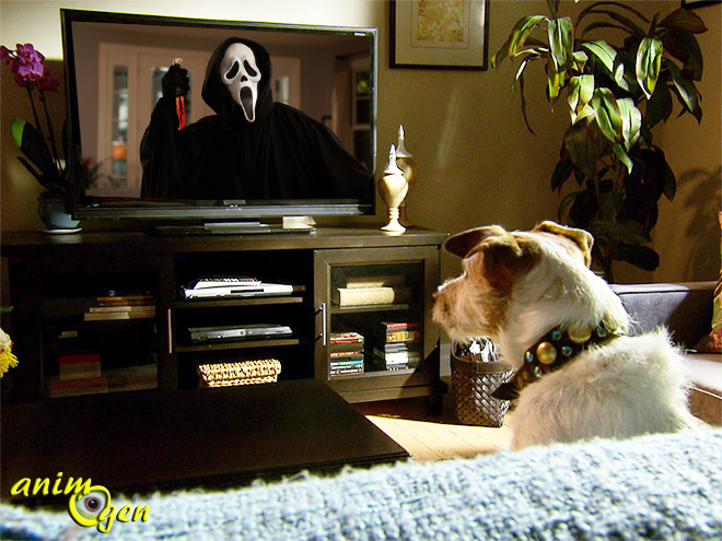 Comportement : les films d'horreur font-ils peur à nos chiens ?