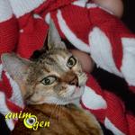 Fabriquez un jouet araignée pour chien, chat et furet (tutoriel, test, avis, prix)