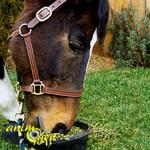 Alimentation et santé : l'importance de l'apport en protéines pour le cheval