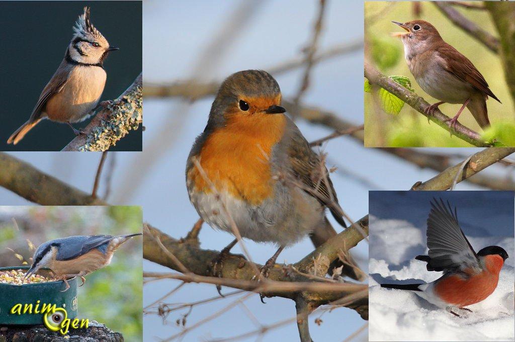 Accueillir les oiseaux dans nos jardins un voyage for Oiseaux de nos jardins