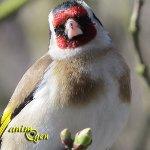 Accueillir les oiseaux dans nos jardins, un voyage intérieur