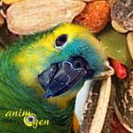 L'alimentation des Amazones : extrudés ou graines, que choisir ?