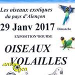 Exposition-Bourse oiseaux volailles à Saint Paterne (72), le dimanche 29 janvier 2017