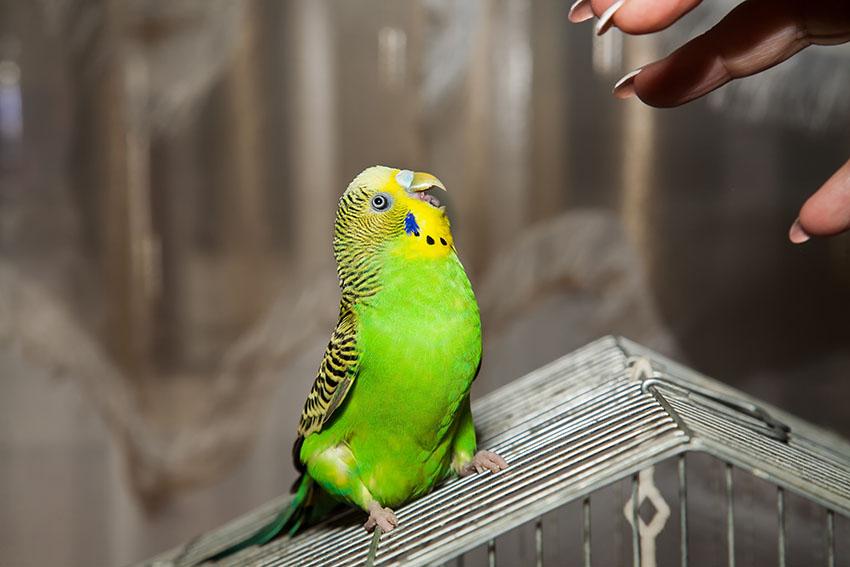 Perception et comportement : est-ce que votre perroquet vous déteste ?
