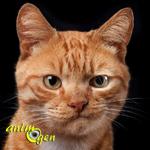 Comportement : comment savoir si votre chat s'ennuie ?