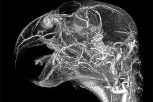 Santé : les maladies partagées par l'homme et le perroquet