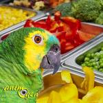 Mon perroquet ne mange pas les aliments frais que je lui propose