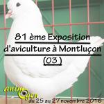 81 ème Exposition d'aviculture à Montluçon (03), du vendredi 25 au dimanche 27 novembre 2016