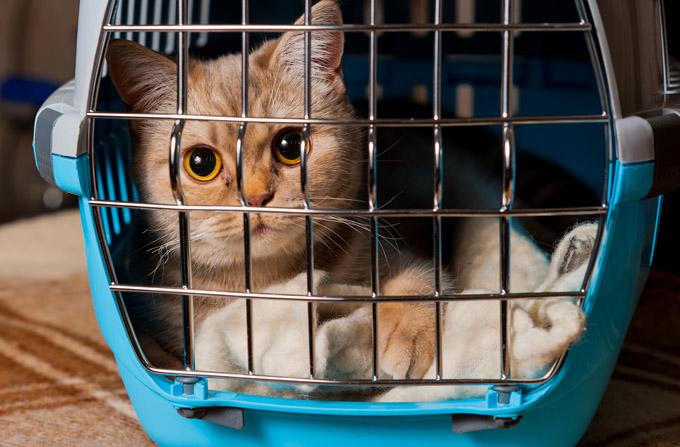 Sac ou caisse de transport pour chat, que choisir ?