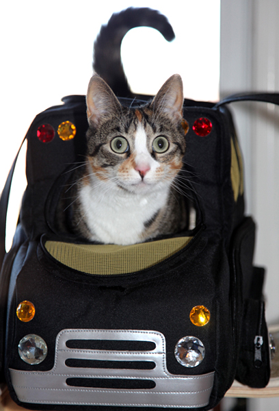 sac ou caisse de transport pour chat que choisir animogen. Black Bedroom Furniture Sets. Home Design Ideas