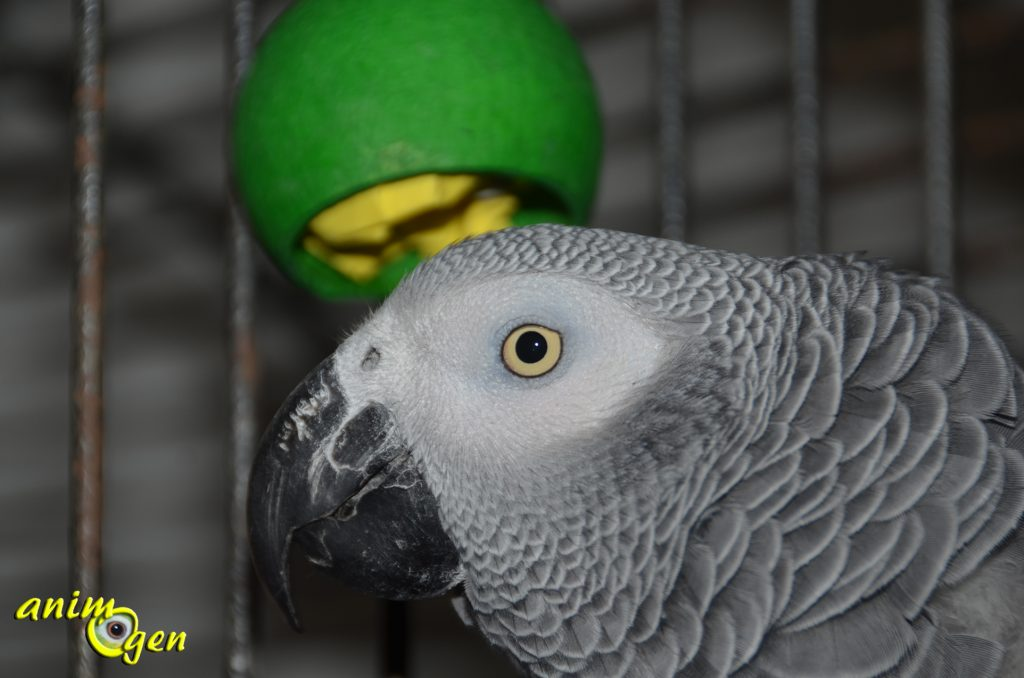 Fabriquez des boules de Noël en coques naturelles pour vos perroquets (tutoriel, test, avis, prix)