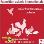 Exposition avicole internationale à Chambéry (73), du samedi 10 au dimanche 11 décembre 2016