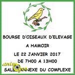 Bourse d'oiseaux d'élevage à Hamoir (Belgique), le dimanche 22 janvier 2017