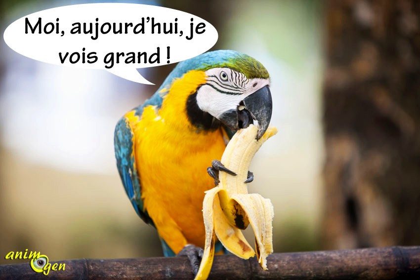 Quelle taille d'aliments nos perroquets préfèrent-ils ?