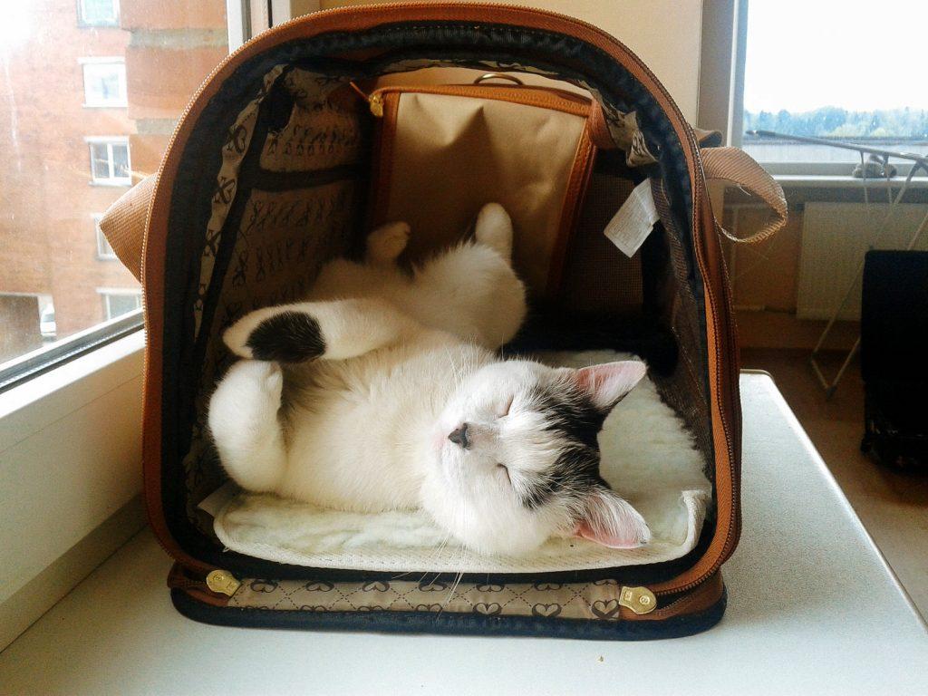 Comment faire accepter à votre chat d'être enfermé durant le transport ?