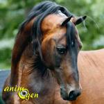 Le Morgan, un cheval né pour plaire