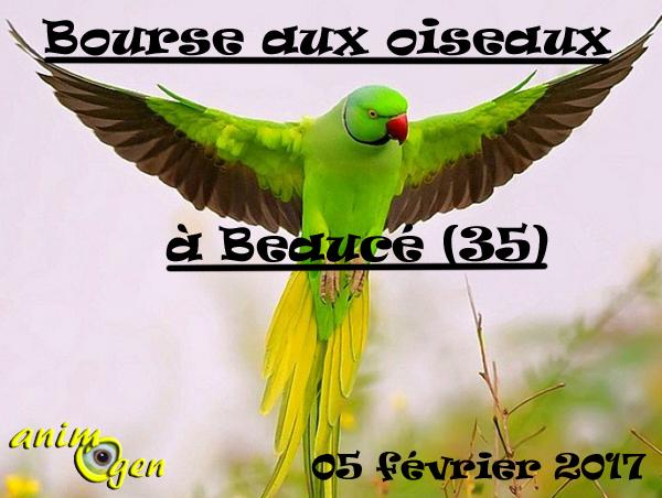23 ème Bourse aux oiseaux exotiques à Beaucé (35), le dimanche 05 février 2017