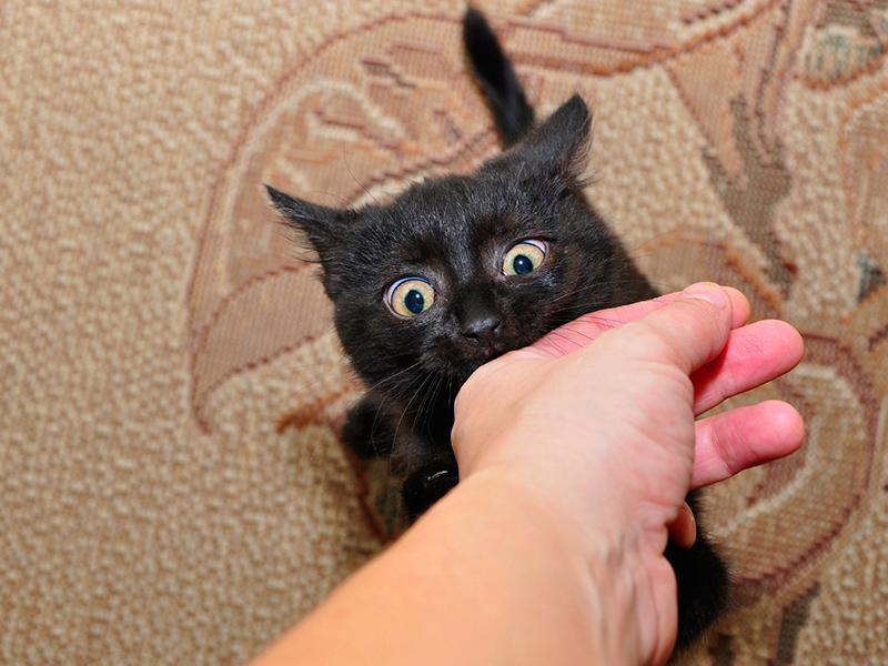 Pourquoi nos chats nous mordent-ils ?