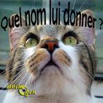 """Liste de noms de chats commençant par """"N"""" pour 2017"""