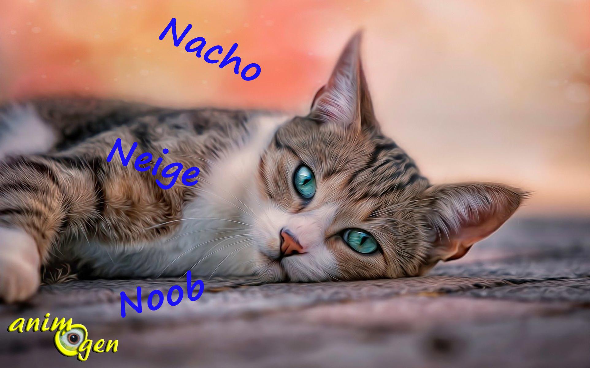nom animal commencant par n