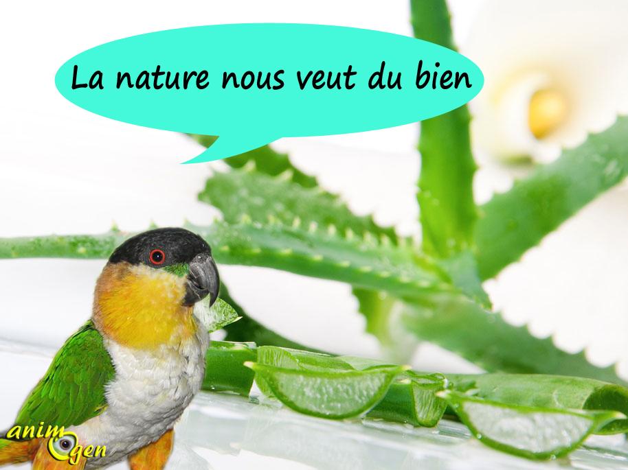 Santé : les herbes qui soignent nos perroquets (effets et limites)