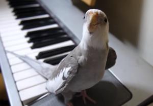 Comment savoir si un perroquet est sourd et interagir avec lui ?