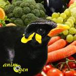 Les fruits et légumes recommandés pour les mainates