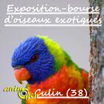 Exposition-bourse d'oiseaux exotiques à Culin (38), du samedi 04 au dimanche 05 mars 2017