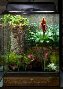 Terrarium : taille et matière, que choisir pour accueillir un lézard ?