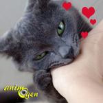 """Les morsures d'amour chez le chat, ou """"l'amour vache"""""""