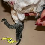 Santé : l'arthrite chez les perroquets (causes, symptômes et traitement)